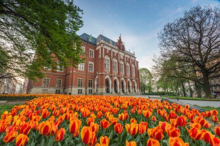 Tulips in front of Collegium Novum – Krakow