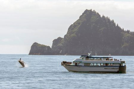 Whale watching cruise tour during Summer