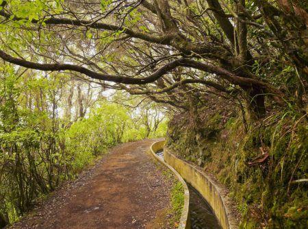 Portugal, Madeira, View of the Levada da Serra do Faial on the part from Ribeiro Frio to Portela.