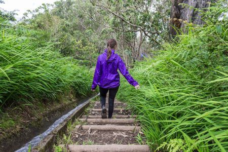 Young woman in purple raincoat walks down the stairs touching high green grass of prehistoric rain forest at Madeira island, Portugal. Levada trail used as irrigation system.